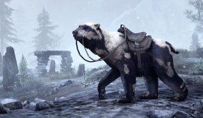 Druadach Mountain Bear | Друадахский горный медведь