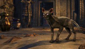 Tu'whacca's Sphynx Cat | Кошка-сфинкс Ту'вакки