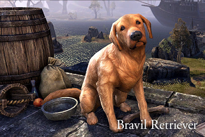 gp_crwn_pets_bravilretriever_1x1