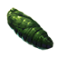 Ancestor Moth Pupa