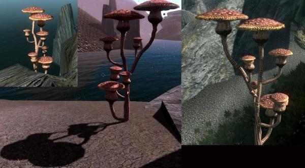 mushroom-az