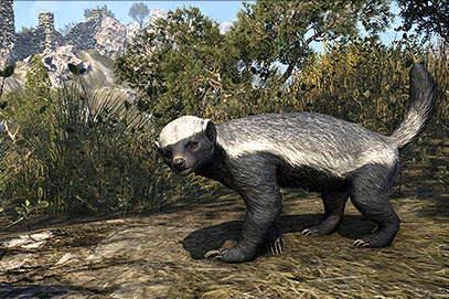 Colovian Badger