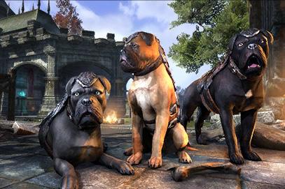gp_crwn_pets_alliancedog_1x1.jpg